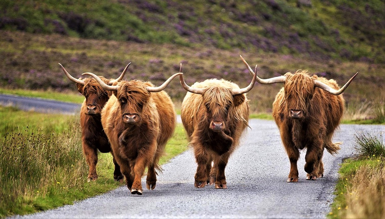 Coo's on the Highway